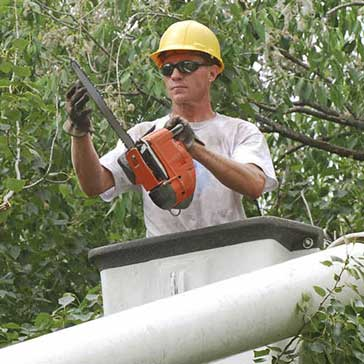 man cutting tree